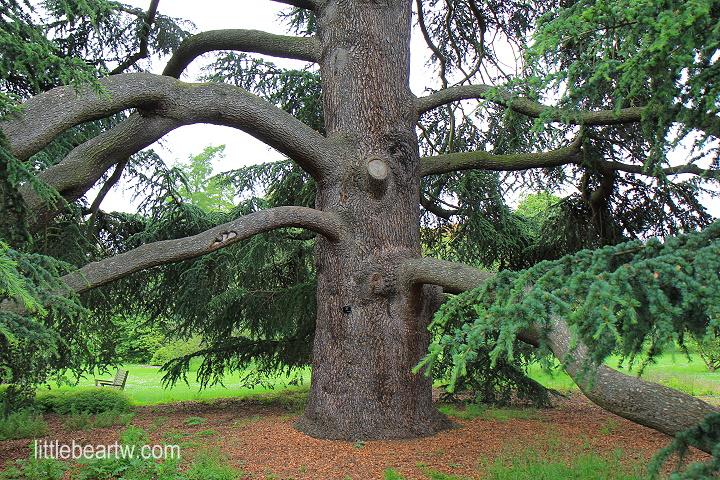 邱園Kew Gardens-26