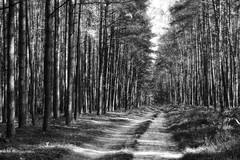 *** (pszcz9) Tags: polska poland przyroda nature natura naturaleza las forest droga road światło cień pejzaż landscape beautifulearth sony a77 bw blackandwhite monochrome czarnobiałe