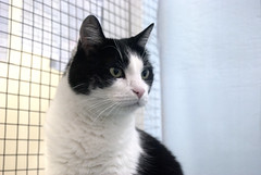 Molly #1 - 7 year old spayed female