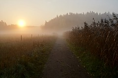 Morning walk towards the sun (docwiththecamera) Tags: sunrise autumn fall fog path fence forest morning vanish