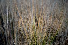Grass (veit.schiffmann) Tags: a7m3 sony ilce7m3 a7iii ilce