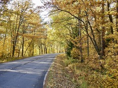 Yellow Road (docwiththecamera) Tags: road yellow autumn fall turn tree forest leaf leaves sky nature
