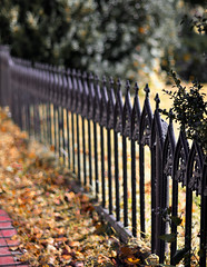 (Kylee Vincent Photography) Tags: mystic mysticct nikon nikond90 50mm bokeh d90 kyleeuliano kyleevincent photography kyleevincentphotography newengland connecticut ct fence spooky halloween fall autumn foliage leaves fallenleaves charm charming quaint iron ironfence creepy cemetery cemeteries old historic mysticseaport mysticseaportmuseum museum seaport boats seaportmuseum rope ropes sea harbor lobster oars lobstertrap lobstertraps history maritime marina marine sail sailing whaling ship themorgan charleswmorgan vessel water river sails outside wood texture nautical mast helm anchor burialground tomb tombstone buryingground graveyard grave