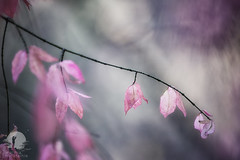 Colorised (warmianaturalnie) Tags: nature tree branch pinkcolor outdoors plant season leaf beautyinnature springtime closeup backgrounds flower nopeople autumn forest colorimage day freshness decoration warmianaturalnie warmia polska poland