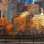 365-4-295 Morning light, downtown Calgary thumbnail