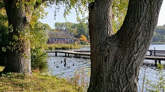 BETWEEN THE TREES (Maarten Kleijkamp) Tags: minangkabau rotterdam kralingsebos kralingseplas forest bos netherlands