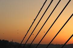 birds watching sunset... (yasin.orhan) Tags: sunset birds