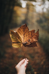 Obligatory autumn shot (desomnis) Tags: forest woods wood woodland nature naturephotography bokeh dof depthoffield leaves leaf autumn autumnal autumncolors autumnfoliage viennawoods wienerwald 5d canon5d canon5dmarkiv sigma35mm sigma35mmf14dghsmart sigma35mmf14 35mm desomnis