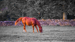 Horse (JuanJ) Tags: nikon d850 lightroom art bokeh nature lens light landscape happy naturephotography outside people white green red black pink skyportrait location architecture building city square squareformat instagramapp shot awesome supershot beauty cute new flickr amazing photo photograph fav favorite favs picture me explore interestingness friends dof horse animal racing kentucky ky shakervillage august 2018