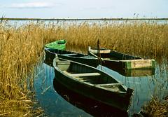 Barques a l'Ebre / Old boats in the marsh (SBA73) Tags: scanned diapositiva epsonv800 pentaxsfx film delta ebre marsh swamp marshland encanyissada barques barcas boats boat catalunya catalonia montsià calm quiet sunk