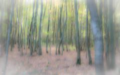 effet arbres 3 (marylenejouan) Tags: monceaux arbres effets fôret flou