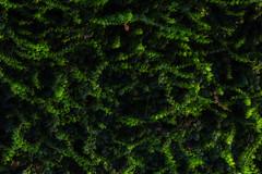 Green world (tomikaro) Tags: sicily palermo agrigento scopello cefalu italy vacation trip erice trapani