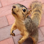 109/365/3761 (September 28, 2018) - Squirrels in Ann Arbor at the University of Michigan - September 28th, 2018 thumbnail