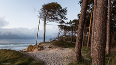 Where the forest meets the sea (He Ro.) Tags: 2018 fischlanddarsszingst weststrand darsswald windflüchter sturm baum gras wald deutschland de mecklenburgvorpommern halbinsel natur wild nationalpark landscape trees landschaft bluehour npvorpommerscheboddenlandschaft ostsee balticsea