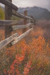 Fire down below (Tracey Rennie) Tags: fence autumn fall foliage colour kananaskis alberta mountain orange