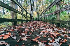 that time of year (mgstanton) Tags: autumn fall leaves leaf bridge low sonya7iii