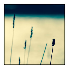 One of a few (david.hayes77) Tags: conrwall 2014 kernow contrejour grass abstract coast godrevy thetowansbeach beach sand reflections stivesbay simplicity light arty southwestcoastalpath autumn autumnal square bokeh graphic blue