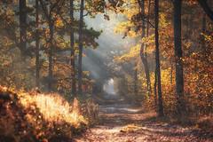 Autumn in the forest (xkolba) Tags: autumn foggy mist forest misty morning tree trees fog outdoor landscape podlasie poland wood sunrise