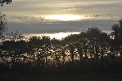 Auf der Rinderweide; Bergenhusen, Stapelholm (87) (Chironius) Tags: stapelholm bergenhusen schleswigholstein deutschland germany allemagne alemania germania германия niemcy morgendämmerung sonnenaufgang morgengrauen утро morgen morning dawn sunrise matin aube mattina alba ochtend dageraad zonsopgang рассвет восходсолнца amanecer morgens dämmerung himmel sky ciel cielo hemel небо gökyüzü silhouette landwirtschaft baum bäume tree trees arbre дерево árbol arbres деревья árboles albero árvore ağaç boom träd baumsilhouette wolken clouds nube