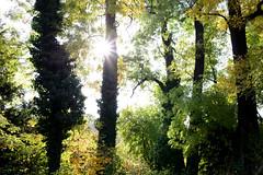 1PRO_1339 (Radu Pavel) Tags: radu radupavel pavel fotononstop cosmos ©radupavelallrightsreserved ©radupavelallerechtevorbehalten ©radupaveltodoslosderechosreservados ©radupavel版権所有 nature natur naturaleza 自然 colours farben colores 色 landscape landschaft paisaje 風景 tree baum árbol 木 outdoor alairelibre imfreien ルーマニア world welt mundo 世界 light licht luz 光 2018