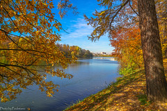 October in Tsaritsyno Park / Октябрь в Царицыно (Vladimir Zhdanov) Tags: autumn october landscape nature russia moscow tsaritsyno park forest foliage tree wood leaf grass sky city architecture building pond water duck bird oak larch