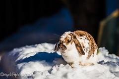 Lost bunny (Mark Starrett) Tags: 180mm ais focus manual nikon