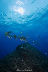 IMG_1356 (davide.clementelli) Tags: diving dive dives padi immersione immersioni ampportofino portofino liguria friends amici underwater underwaterlife sottacqua