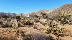 Camping in the Anza-Borrego Desert (slworking2) Tags: