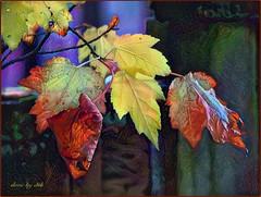 Autumn Dream (done by deb) Tags: digitalart digitalpainting deepdreamgenerator colorful brightcolors leaves autumn fallcolors fall