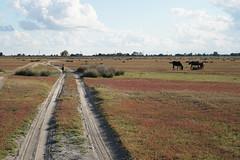 Danube Delta, Letea (Daniel Brennwald) Tags: danubedelta romania donaudelta