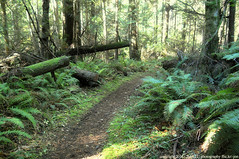 2018-10-13 Whistle Lake Trail 234 (01) (1024x680) (-jon) Tags: anacortes skagitcounty skagit fidalgoisland sanjuanislands washingtonstate washington pnw pacificnorthwest salishsea pugetsound acfl anacortescommunityforestlands whistlelake lake hike hiking walk walking trail path 234 nikon nikonl22 fall season maple mapleleaf leaf color colour tree woods forest a266122photographyproduction nikoncoolpixl22 coolpix