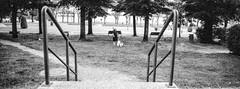 Scan-181014-0020 (manuelcesari) Tags: hasselbladxpan trix kodak panorama wide black white biano e nero