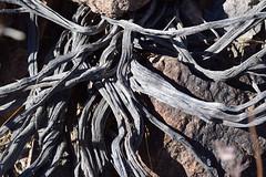 Sloan Canyon (pchgorman) Tags: northmcculloughwilderness sloancanyonnationalconservationarea nevada clarkcounty october deserts