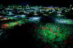 山口ゆめ花博-1000万の花夜景 #3ーYamaguchi Yume Flower Expo - 10 million flowers Night view #3 (kurumaebi) Tags: yamaguchi 阿知須 山口市 nikon d750 山口ゆめ花博 夜 night yamaguchiyumeflowerexpo