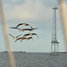 Pelicans, Through the Rigging, Charleston Bay