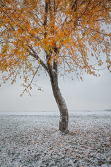 Fall or Winter? (Jake Rogers Photo) Tags: jakerogersphotography jakerogers tree orange snowy winter snow midwest councilbluffsiowa councilbluffs iowa fallcolor leaves autumn fall