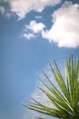 Along came a spider (luigi_cinque) Tags: color pop spider nature blue sky web net green ragno cloud