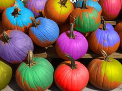 Happy Autumn! (WilliamND4) Tags: pumpkins autumn