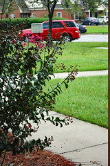 Crape Myrtle And Cars. (dccradio) Tags: lumberton nc northcarolina robesoncounty outdoor outdoors rainy rain hurricane florence hurricaneflorence stormy storm sunday september earlfall earlyautumn latesummer afternoon goodafternoon sidewalk concrete cement car vehicle suv tree trees greenery foliage treebranches treebranch branch branches treelimb treelimbs saturn red vue grass lawn ground yard crapemyrtle crepemyrtle flowering flower flowers buds bud budding bloom blooming blossoms nikon d40 dslr