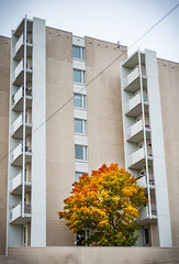 The Color Point (Mikael Neiberg) Tags: concrete tree autumn fall syksy apartmenthouse colorfull