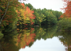 True Colors (Patricia McAtee - Photos of Maine) Tags: reflection autumn fall foliage leaves stream water color quiet peacefulwaters waterscape trees swimming fishing ropeswing