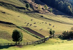 Riomolino, Val Pusteria (Mattia Camellini) Tags: dolomiti dolomites altoadige sudtirol natura unescoworldheritage montagna italy mattiacamellini green canoneos7d canonefs18135mmf3556is explore