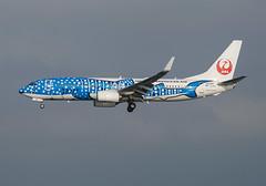 Japan Transocean Air Boeing 737-8Q3 JA05RK (Jinbei Jet Livery) (gama_cat_) Tags: jal jta b737 b738 b737800