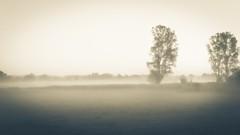 the_fog_sw (Leif Junghans) Tags: klensby nebel fog sunrise sonnenaufgang wald bäume