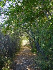 Laubtunnel (Thomas230660) Tags: sonne herbst flora sony arnstadt wanderung landschaft landscape bäume thüringen trees blätter