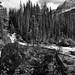 It's Just Beyond That Large Boulder! (Black & White, Yoho National Park)