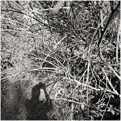 anselmo 80 (beauty of all things) Tags: italien toskana montespertoli anselmo flora quadratisch sw bw