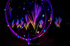 Floriade nightfest (Theresa Hall (teniche)) Tags: 2018 australia canberra floriade september september2018 teniche theresahall theresahalldalliessi balloon color colour entertainment festival flora flower flowers spring tulips