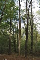 (kotmariusz) Tags: trees nature suburbs forest autumn jesień drzewa natura las przedmieścia poland polska świdnica canon efs24mmstm