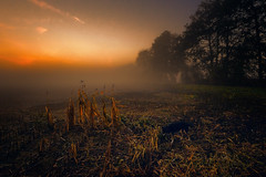First lights in the morning (radonracer) Tags: fog morning early dog